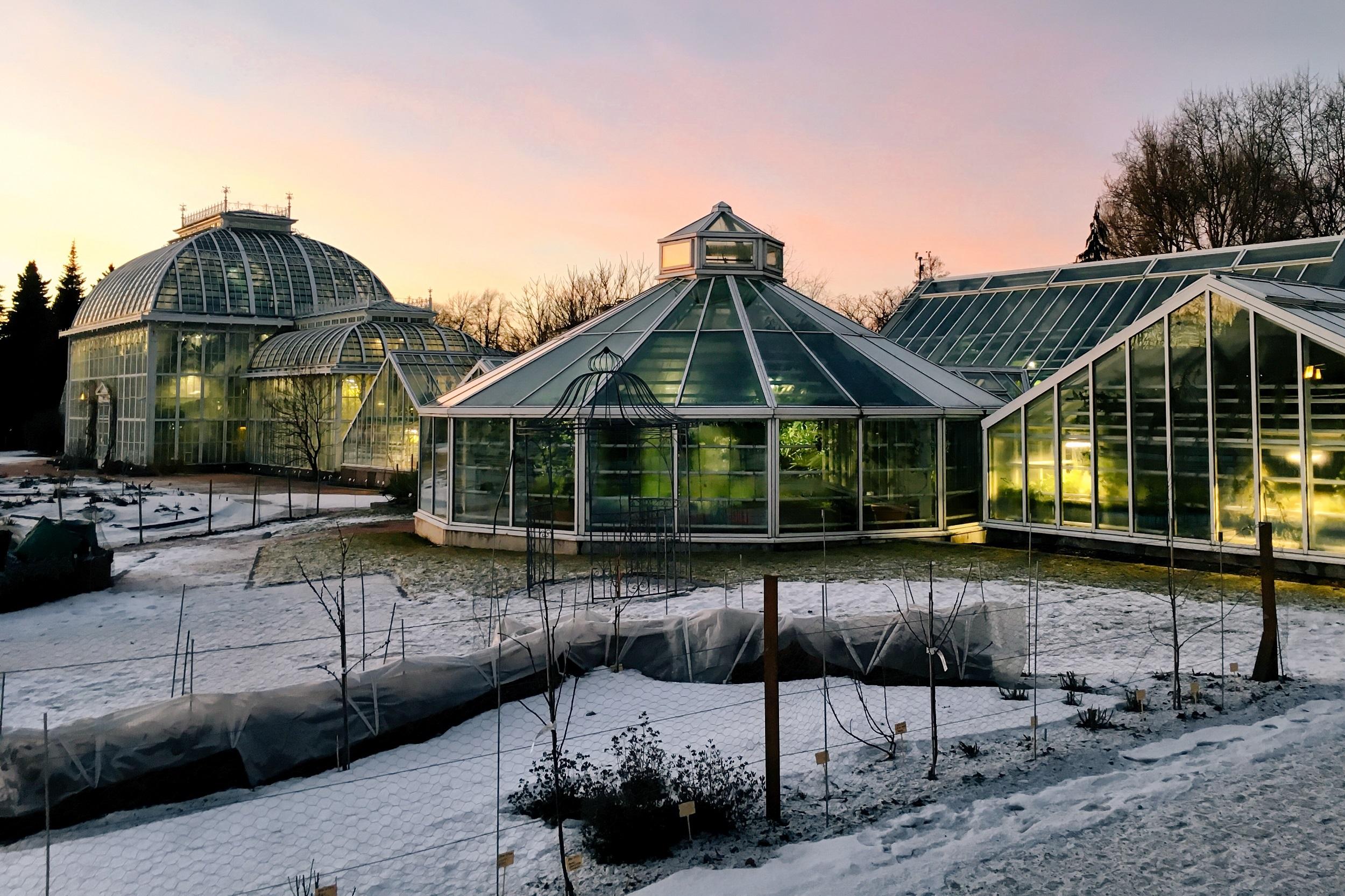 Зимний сад Хельсинки